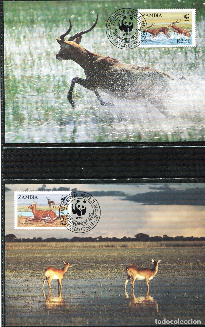 Sellos: ZAMBIA 1987 Mi 438 a 441 4 sellos MNH + 4 FDC + 4 tarjetas maximas WWF - Foto 5 - 106682603