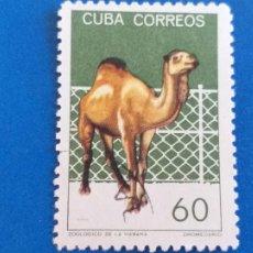 Sellos: SELLO DE CUBA. MICHEL 964. YVERT 781. ZOOLOGICO DE LA HABANA. DROMEDARIO. AÑO 1964. Lote 207482925