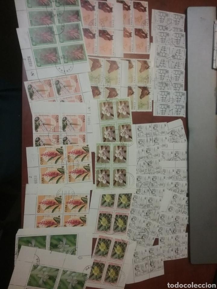 Sellos: Sellos R. Cuba mtdos/bloques 2x2/1970-1980/stock/coleccion/al por mayor/flora/fauna/animales/ - Foto 2 - 197579175