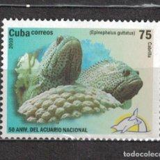 Sellos: 5365 CUBA 2010 MNH PISCES - EPINEPHELES FISH. Lote 221676261