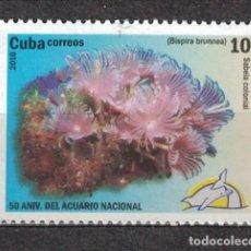 Sellos: 5361-1 CUBA 2010 MNH BISPIRA BRUNNEA MARINE FAUNA. Lote 221676295