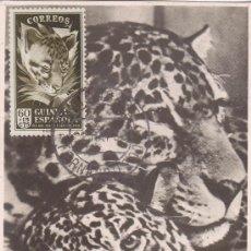 Sellos: GUINEA ESPAÑOLA FAUNA DIA DEL SELLO 1951 (EDIFIL 308) EN BONITA Y RARA TARJETA MAXIMA.. Lote 22169377