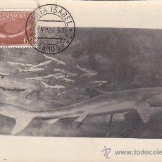 Sellos: GUINEA ESPAÑOLA PECES DIA DEL SELLO 1954 (EDIFIL 341) EN BONITA Y RARA TARJETA MAXIMA.. Lote 22195269