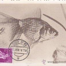 Sellos: IFNI DIA DEL SELLO 1953 FAUNA. PECES (EDIFIL 100) EN BONITA Y RARA TARJETA MAXIMA.. Lote 21885446