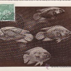 Sellos: SAHARA PECES DIA DEL SELLO 1953 (EDIFIL 109) EN BONITA Y RARA TARJETA MAXIMA.. Lote 21946359