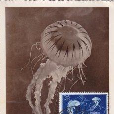 Sellos: IFNI DIA DEL SELLO 1953 FAUNA PECES MEDUSA (EDIFIL 99) EN BONITA Y RARA TARJETA MAXIMA.. Lote 21885470