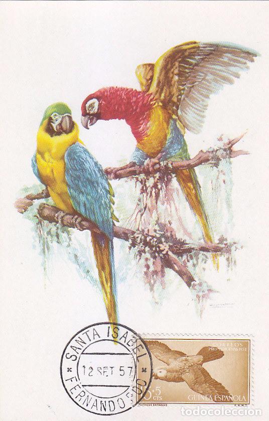 GUINEA AVES PAJAROS FAUNA PRO INDIGENAS 1957 (EDIFIL 366) EN BONITA Y RARA TARJETA MAXIMA. (Sellos - España - Dependencias Postales - Tarjetas Máximas)