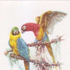 Sellos: GUINEA AVES PAJAROS FAUNA PRO INDIGENAS 1957 (EDIFIL 366) EN BONITA Y RARA TARJETA MAXIMA.. Lote 4603240