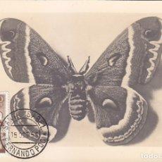 Sellos: GUINEA ESPAÑOLA MARIPOSAS DIA DEL SELLO 1953 (EDIFIL 333) EN BONITA Y RARA TARJETA MAXIMA MODELO 1.. Lote 28547249
