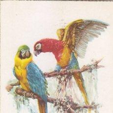 Sellos: GUINEA AVES PAJAROS FAUNA PRO INDIGENAS 1957 (EDIFIL 365) EN BONITA Y RARA TARJETA MAXIMA MODELO 2.. Lote 7241539