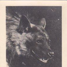Sellos: SAHARA DIA DEL SELLO 1957 FAUNA HIENA MANCHADA (EDIFIL 142) EN BONITA Y RARA TARJETA MAXIMA.. Lote 135257630