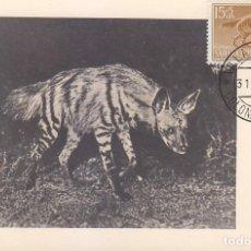 Sellos: SAHARA DIA DEL SELLO 1957 FAUNA HIENA RAYADA (EDIFIL 143) EN BONITA Y RARA TARJETA MAXIMA.. Lote 135299050