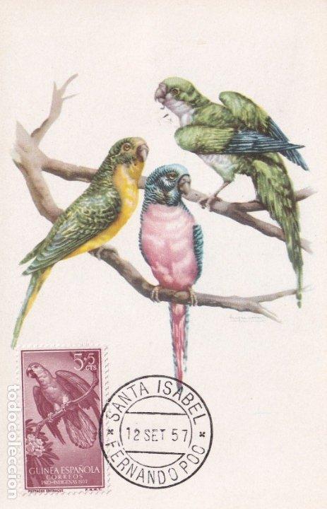 GUINEA AVES PAJAROS FAUNA PRO INDIGENAS 1957 (EDIFIL 365) EN BONITA Y RARA TARJETA MAXIMA MODELO 1. (Sellos - España - Dependencias Postales - Tarjetas Máximas)