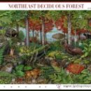 Sellos: USA 2005 NORTHEAST DECIDUOUS FOREST SHEET OF 10 SC 3899SP, MI B3907-16, SG MS4416, YV BF3629-38. Lote 47960946