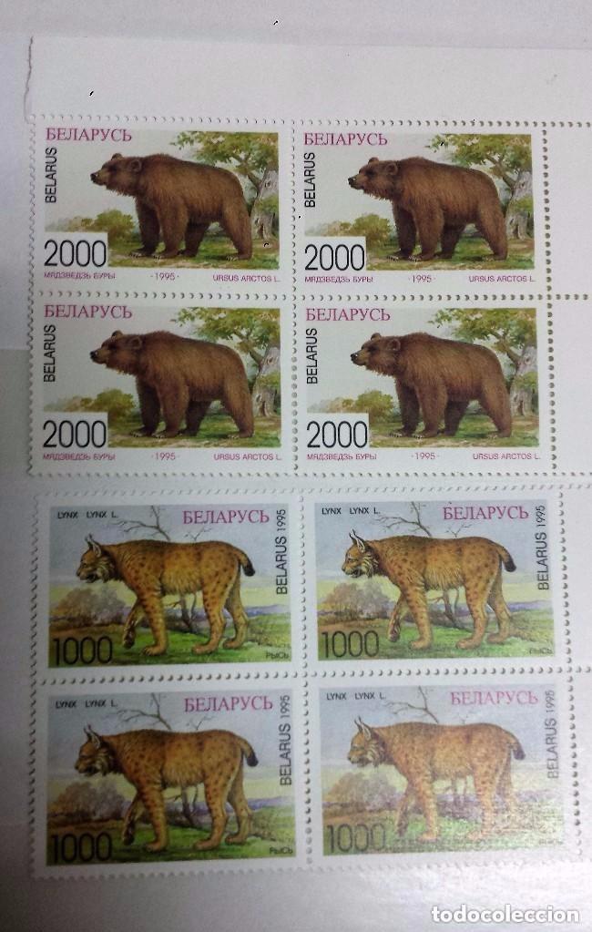 Sellos: BIELORRUSIA, SERIE DE 5 SELLOS, ANIMALES PROTEGIDOS EN PELIGRO DE EXTINCIÓN.EN BLOQUES DE 4 SELLOS N - Foto 6 - 80878079