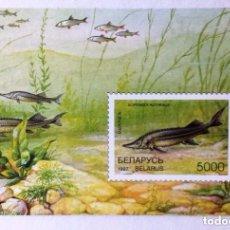 Sellos: BIELORRUSIA, HOJA BLOQUE DE BIELORRUSIA, FAUNA, PECES AÑO 1997 . Lote 95751623