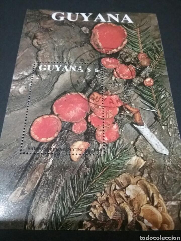 HB/SELLOS DE GUAYANA MATASELLADA (GUYANA).1989. HONGOS. SETAS. LIQUENES. MOSGO. PLANTAS.ECOSISTEMA (Sellos - Temáticas - Fauna)