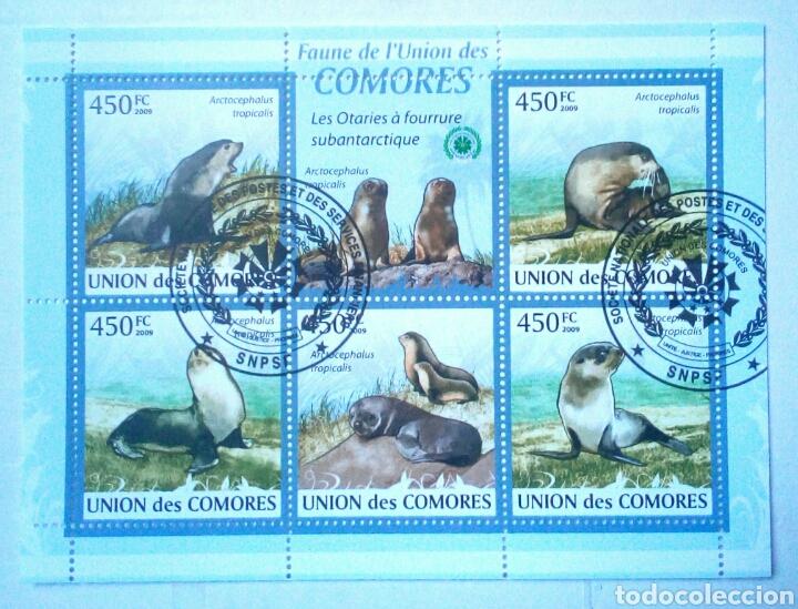 LEONES MARINOS HOJA BLOQUE DE SELLOS USADOS RECIENTES DE COMORAS (Sellos - Temáticas - Fauna)