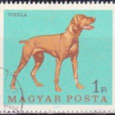 Sellos: 1967 - HUNGRIA - PERROS - BRACO HUNGARO - YVERT 1905. Lote 134070730