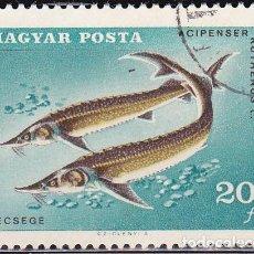 Sellos: 1967 - HUNGRIA - PECES - PESCA DEPORTIVA - ESTURION ESTERLETE - YVERT 1910. Lote 134071102