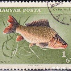 Sellos: 1967 - HUNGRIA - PECES - PESCA DEPORTIVA - CARPA COMUN - YVERT 1912. Lote 134071250