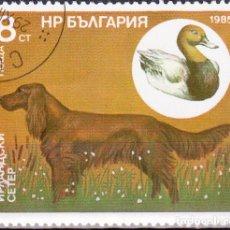 Timbres: 1985 - BULGARIA - PERROS DE CAZA Y SUS PRESAS - SETTER IRLANDES / PATO - YVERT 2976. Lote 134985146