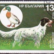 Timbres: 1985 - BULGARIA - PERROS DE CAZA Y SUS PRESAS - SETTER INGLES / PATO - YVERT 2977. Lote 134985290