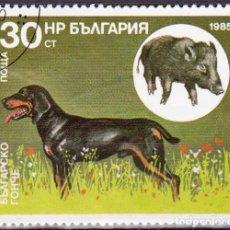 Timbres: 1985 - BULGARIA - PERROS DE CAZA Y SUS PRESAS - SABUESO BULGARO / JABALI - YVERT 2980. Lote 134987074
