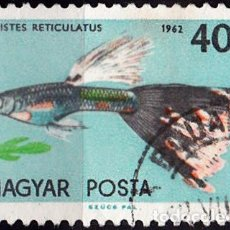 Sellos: 1962 - HUNGRIA - PECES ORNAMENTALES - GUPPY / PEZ MILLON - YVERT 1497. Lote 140302674