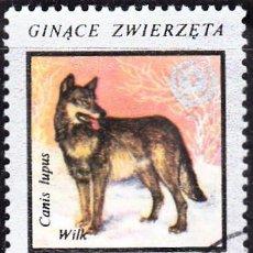 Francobolli: 1977 - POLONIA - ANIMALES EN PELIGRO DE EXTINCION - LOBO - YVERT 2334. Lote 143857402