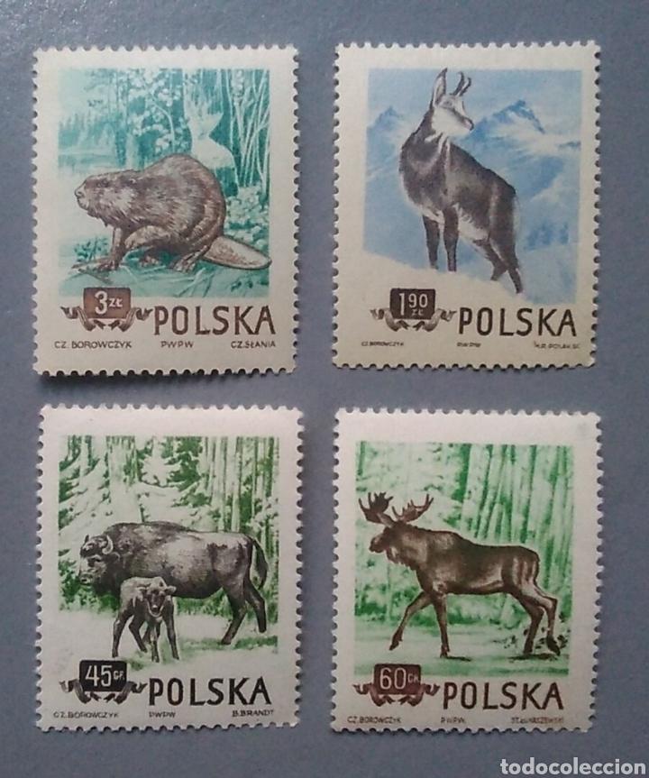 SELLOS POLSKA POLONIA 785 / 88 ANIMALES DEL BOSQUE FAUNA SERIE COMPLETA NUEVA (Sellos - Temáticas - Fauna)