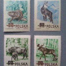 Sellos: SELLOS POLSKA POLONIA 785 / 88 ANIMALES DEL BOSQUE FAUNA SERIE COMPLETA NUEVA. Lote 148095970