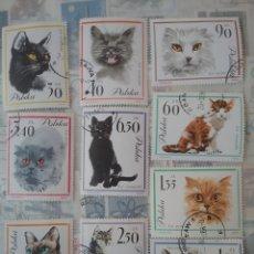 Sellos: SELLOS DE POLONIA (POLSKA) MTDOS/1964/GATOS DOMESTICOS/FELINOS/MAMIFEROS/ANIMALES/NATURALEZA/. Lote 150109768