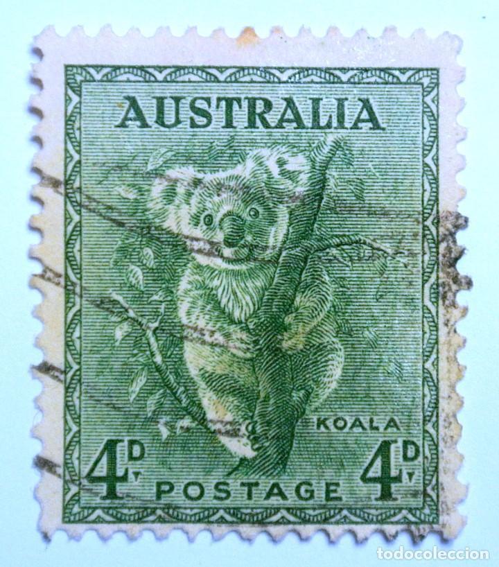 SELLO POSTAL AUSTRALIA 1956, 4 D, KOALA , USADO (Sellos - Temáticas - Fauna)