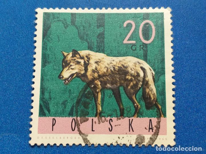 SELLO DE POLONIA. Nº YVERT 1483. AÑO 1965. FAUNA. ANIMALES DE LOS BOSQUES. LOBO (Sellos - Temáticas - Fauna)