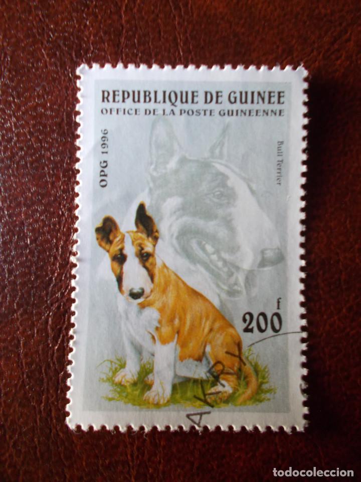 REPUBLICA DE GUINEA SELLO USADO PERRO 1996 (Sellos - Temáticas - Fauna)
