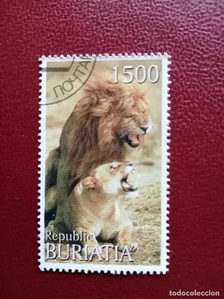 BURIATIA - REPÚBLICA DE RUSIA - VALOR FACIAL 1500 - LEÓN Y LEONA. (Sellos - Temáticas - Fauna)