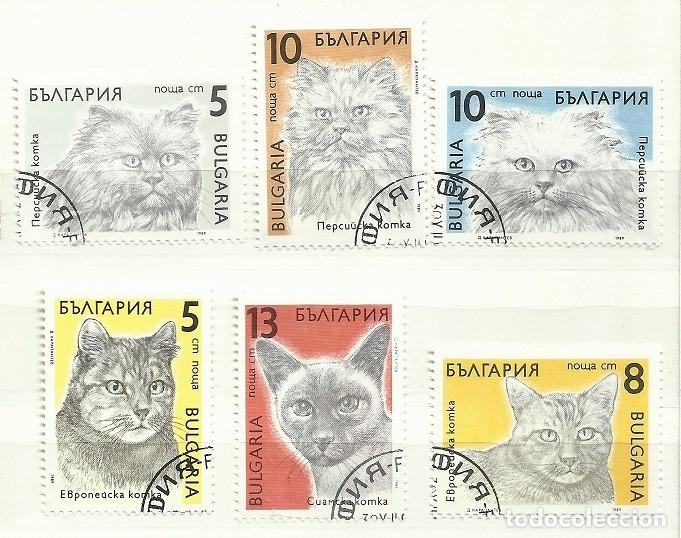 BULGARIA 1989 LOTE SELLOS FAUNA FELINOS FELINO GATO GATOS (Sellos - Temáticas - Fauna)