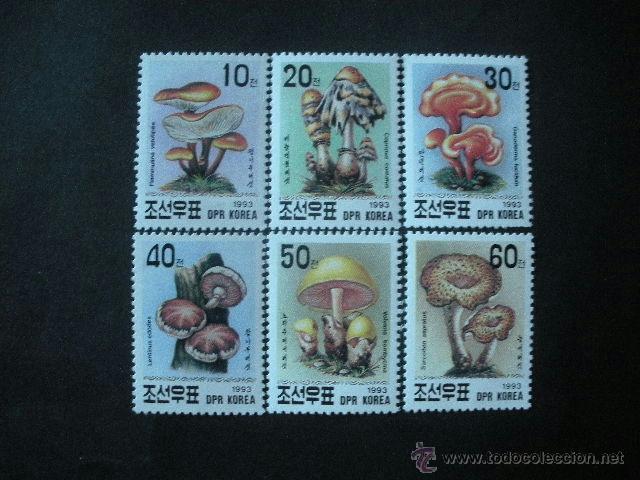 COREA DEL NORTE 1993 IVERT 249/52 *** FLORA - SETAS - CHAMPIÑONES (Sellos - Temáticas - Flora)