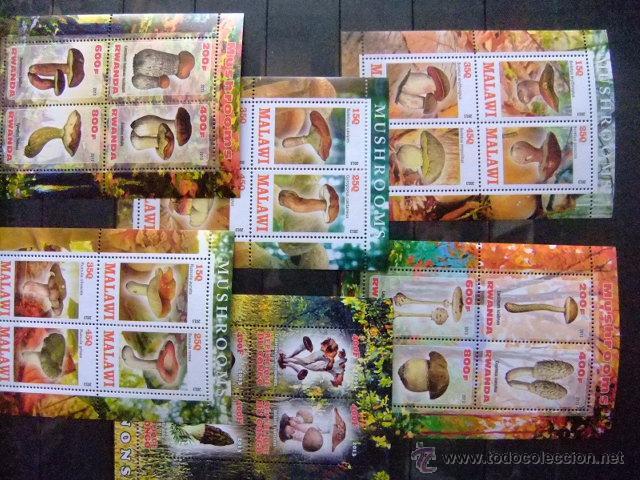 CHAMPIGNONS MUSHROOMS 2013 CONGO DJIBOUTI RWANDA CÔTE D´IVOIRE CHAD NUEVOS ** MNH (Sellos - Temáticas - Flora)