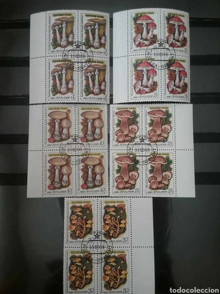 SELLOS DE URSS (UNION SOVIETICA)MATASELLADOS.1986.HONGOS.SETAS.FLORA.NATURALEZA.AMANITAS.FASCICULADA (Sellos - Temáticas - Flora)