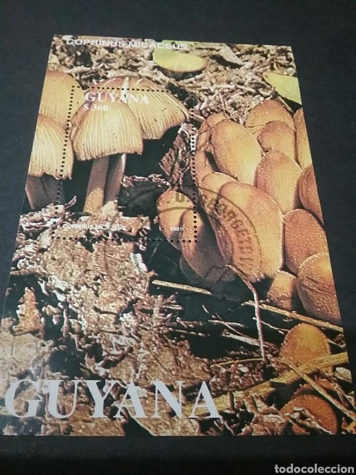 HB DE GUAYANA MATASELLADA. 1991. MUSGO. MICELOS. SETAS. ECOSISTEMA. NATURALEZA. FLORA. HONGOS. (Sellos - Temáticas - Flora)