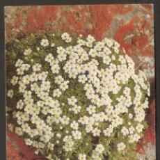 Sellos: ALEMANIA .1983. MÁXIMA. FLORA.FLORES. Lote 118091019