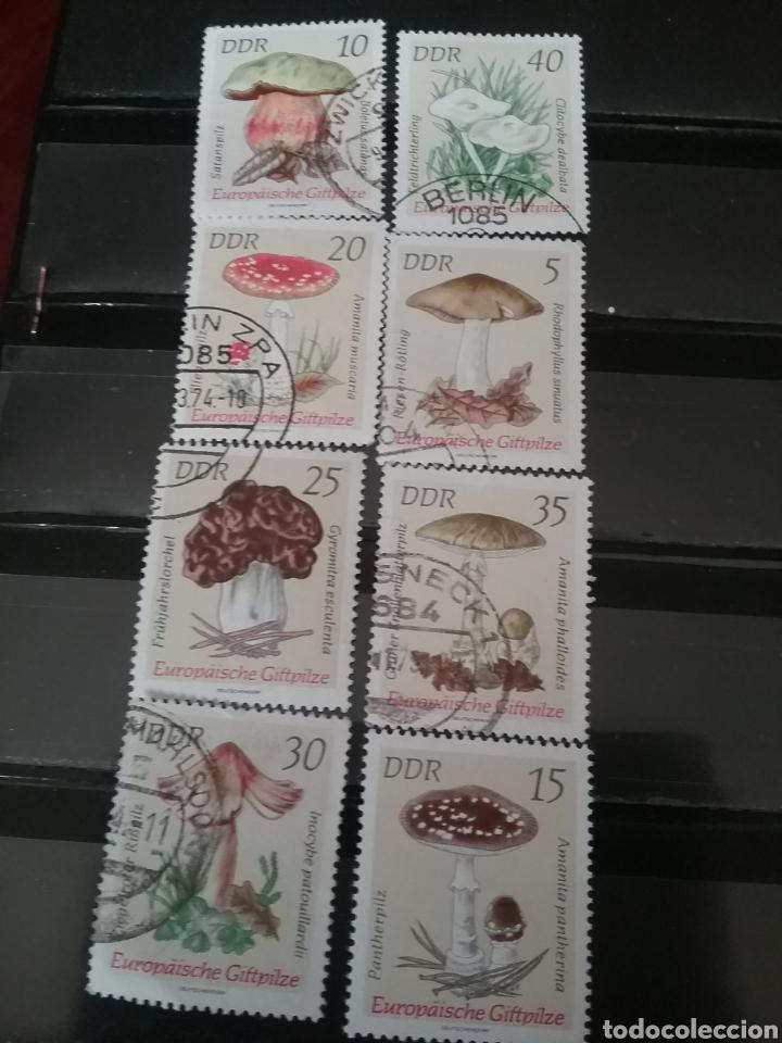 SELLOS ALEMANIA, R. D (DDR) 1974 MTDOS/1974/HONGOS/SETAS VENENOSAS/PLANTAS/NATURALEZA/FLORA (Sellos - Temáticas - Flora)