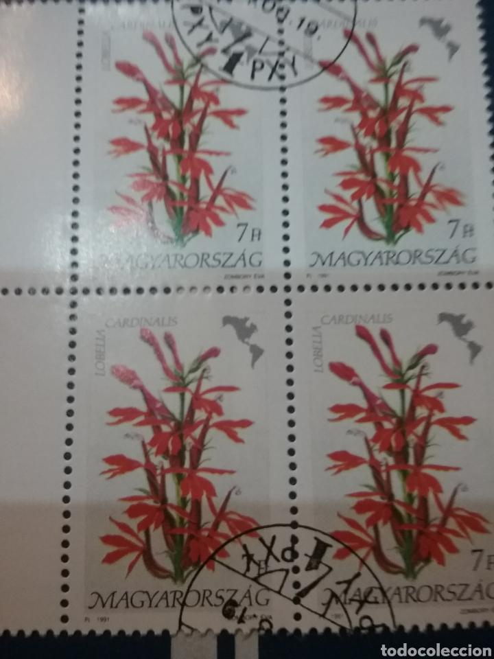 SELLOS DE HUNGRÍA (MAGYAR POSTA) MTDOS. 1991. FLORA. FLORES. PLANTAS. NATURALEZA. AMERICA. PLANTAS. (Sellos - Temáticas - Flora)