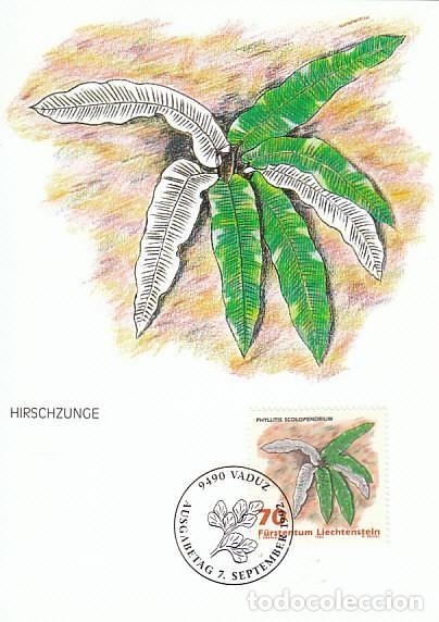 LIECHTENSTEIN IVERT 988, HELECHOS: PHYLLITIS SCOLOPENDRIUM, TARJETA MAXIMA DE 7-9-1992 (Sellos - Temáticas - Flora)