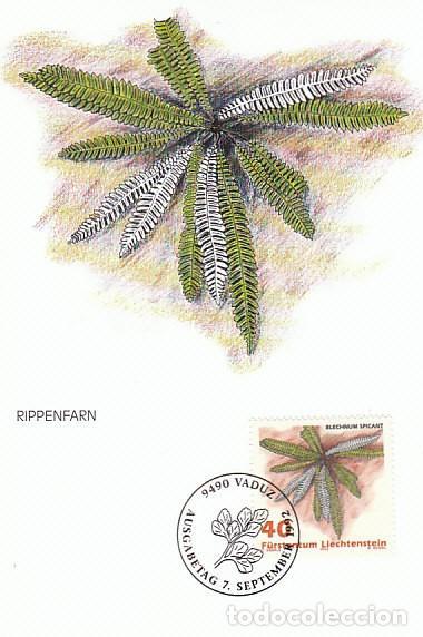 LIECHTENSTEIN IVERT 986, HELECHOS: BLECHNUM SPICANT, TARJETA MAXIMA DE 7-9-1992 (Sellos - Temáticas - Flora)