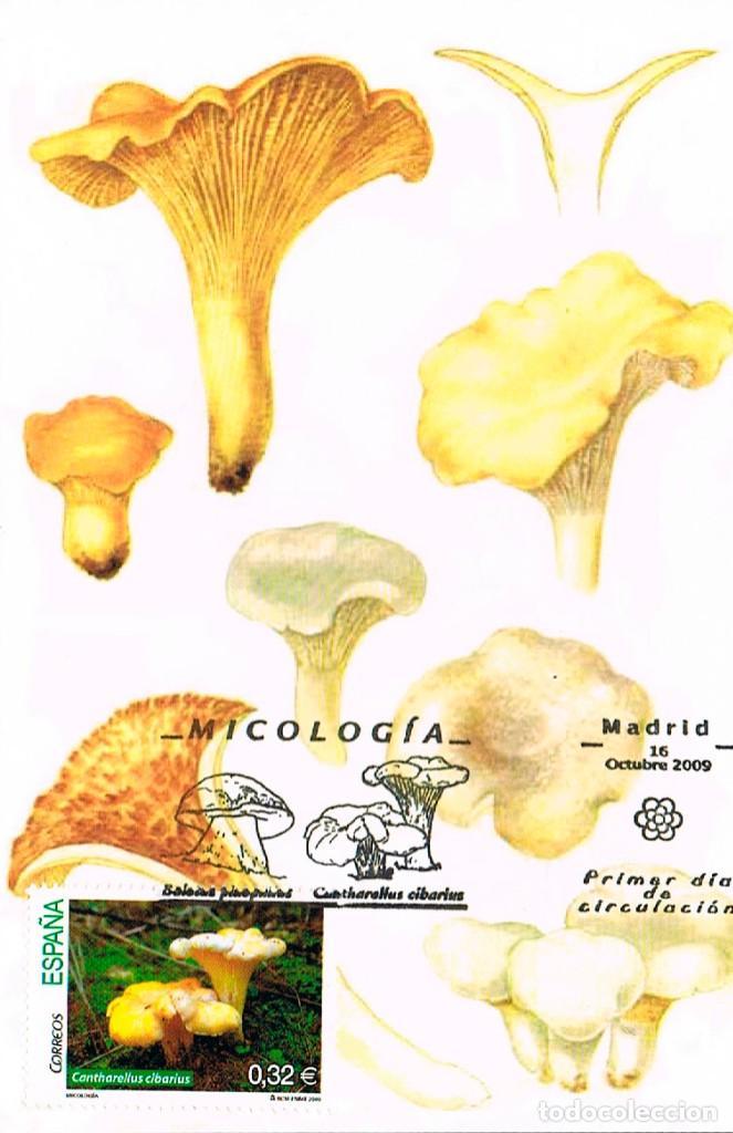 EDIFIL 4518, MICOLOGIA, CANTHARELLUS CIBARIUS , TARJETA MAXIMA PRIMER DIA DE 16-10-2009 (Sellos - Temáticas - Flora)