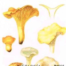 Sellos: EDIFIL 4518, MICOLOGIA, CANTHARELLUS CIBARIUS , TARJETA MAXIMA PRIMER DIA DE 16-10-2009. Lote 226868990