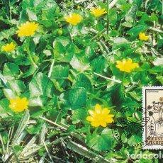 Sellos: LIECHTENSTEIN IVERT 1060, PLANTAS MEDICINALES: CELIDONIA MENOR, TARJETA MAXIMA DE 5-9-1995. Lote 278576943